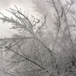 Branches in snow — Stock fotografie