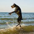 Standing dog in water - Stock Photo