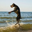 Standing dog in water — Stock Photo
