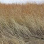 River grass — Stock Photo