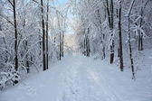 зимний путь — Стоковое фото