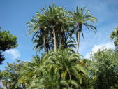 Florida palm trees — Stock Photo