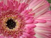 Tempo da flor — Fotografia Stock