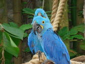 Parrots in Florida. — Stock Photo