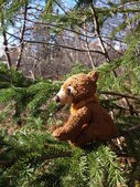 Niedźwiedzie w lesie — Zdjęcie stockowe