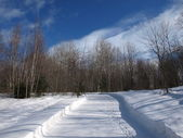 Winter scene with snow — Stock Photo