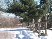 зимний забор — Стоковое фото
