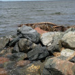 Rocks at the shore — Stock Photo