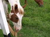 Pferd essen holz — Stockfoto