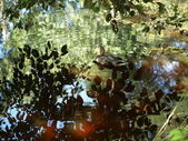 Reflections — Stock Photo