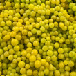 Green grapes. — Stock Photo #1425709