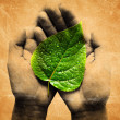 Green dewy leaf in a hands — Stock Photo