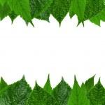 Green leaves frame — Stock Photo #1517872