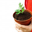Stock Photo: Plant in child hands