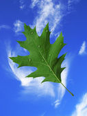 Leaf in the sky — Stock Photo