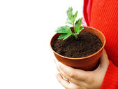 Plant in child hands — Stock Photo