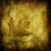 Grunge autumnal background — Stock Photo