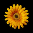 Yellow artificial flower - ストック写真
