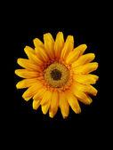 Gele kunstmatige bloem — Stockfoto