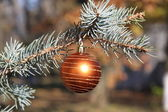 Fir branch with decoration — Stock Photo