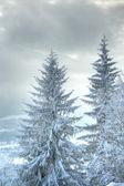 árvore de abeto coberto de neve nas montanhas — Foto Stock