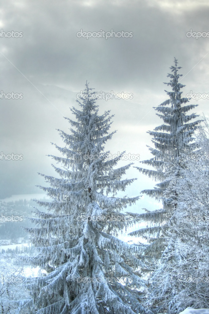 Snow covered fir tree in mountains   Stockfoto #1685336