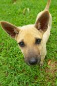 Homeless cute doggy — Stock Photo