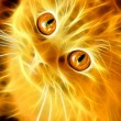 Fiery cat - Stock Photo