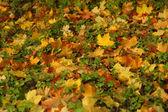 Autumn grass — Stock Photo