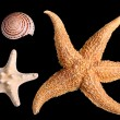 Starfishes and seashell — Stock Photo
