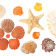 Seashells — Stock Photo #1428446