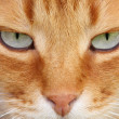 Cat eyes - Stockfoto