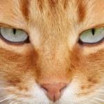 Cat eyes — Stock Photo