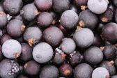 Black currant — Stock Photo