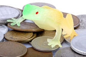 Toad and coins — Stock Photo