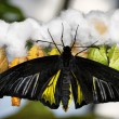 Butterfly and cocoons — Stock Photo