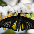 Butterfly and cocoons - Stock Photo