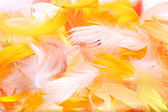 Colored feathers — Stock Photo