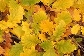 Autumn leaves background — Stock Photo