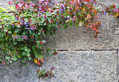 Stone wall with flowers — Stock Photo