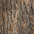 Royalty-Free Stock Photo: Oak bark