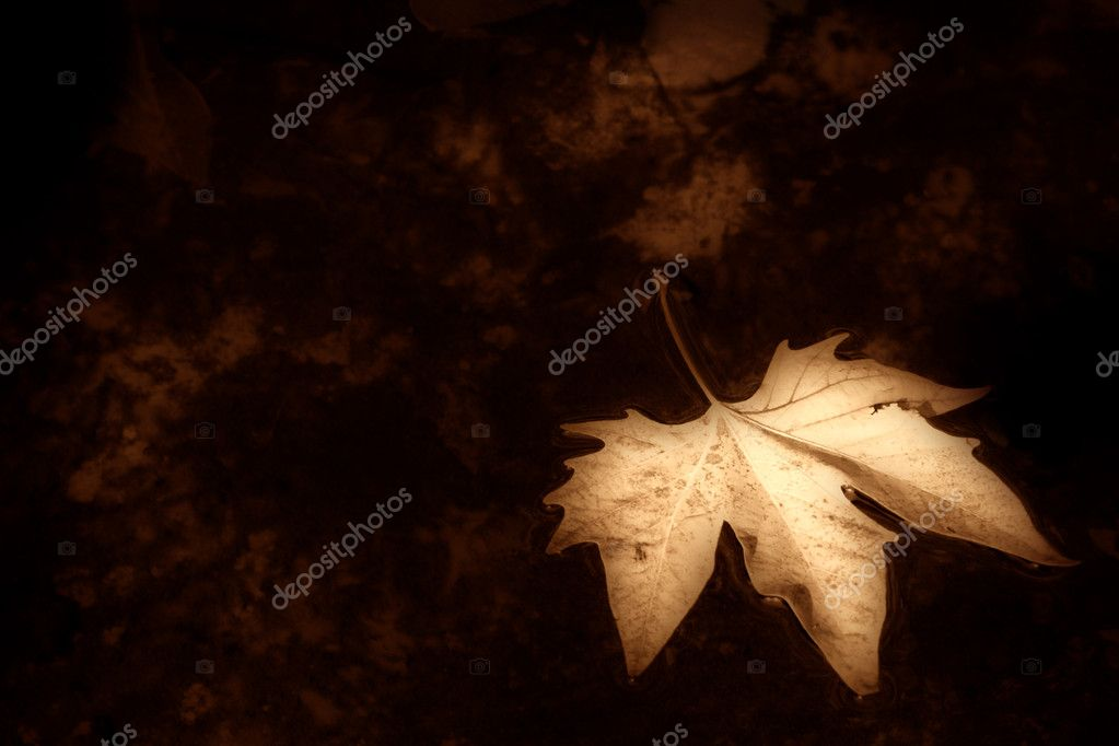 leaf in pond, sepia toned