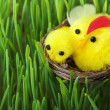 Stock Photo: Easter chicks in grass