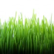 Long grass — Stock Photo