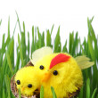 Easter chicks in the grass - Stock Photo