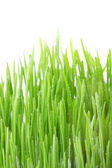 Dew covered grass — Stock Photo