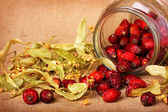 Rose hips and dry linden blossom — Stock Photo