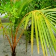 Stock Photo: Palm on tropical island