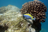 Tropical coral reef — Stock Photo