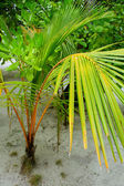 Palm on tropical island — Stock Photo